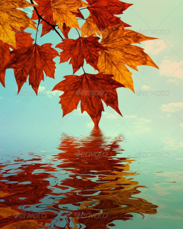 Fall Sunshine Wallpaper Autumn Water Reflection Background Stock Photos