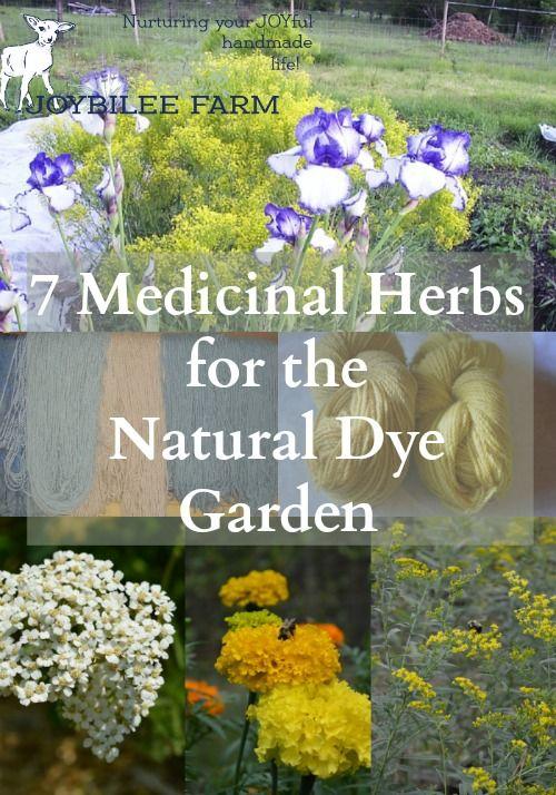 Seven Medicinal Herbs for the Natural Dye Garden