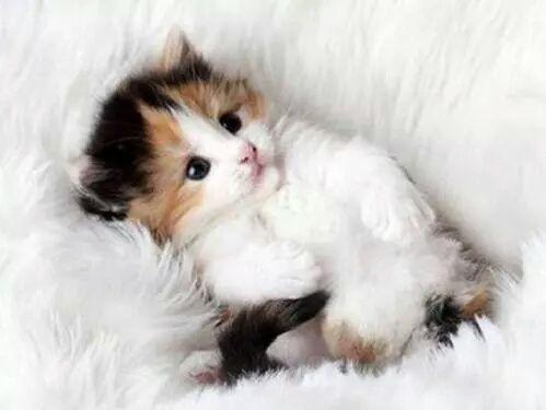 cat, cute, and animal-bild