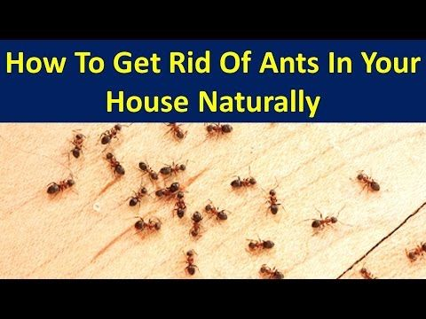 Best 25 Ants In House Ideas Only On Pinterest Ant Killer Spray Bug Trap And Under A