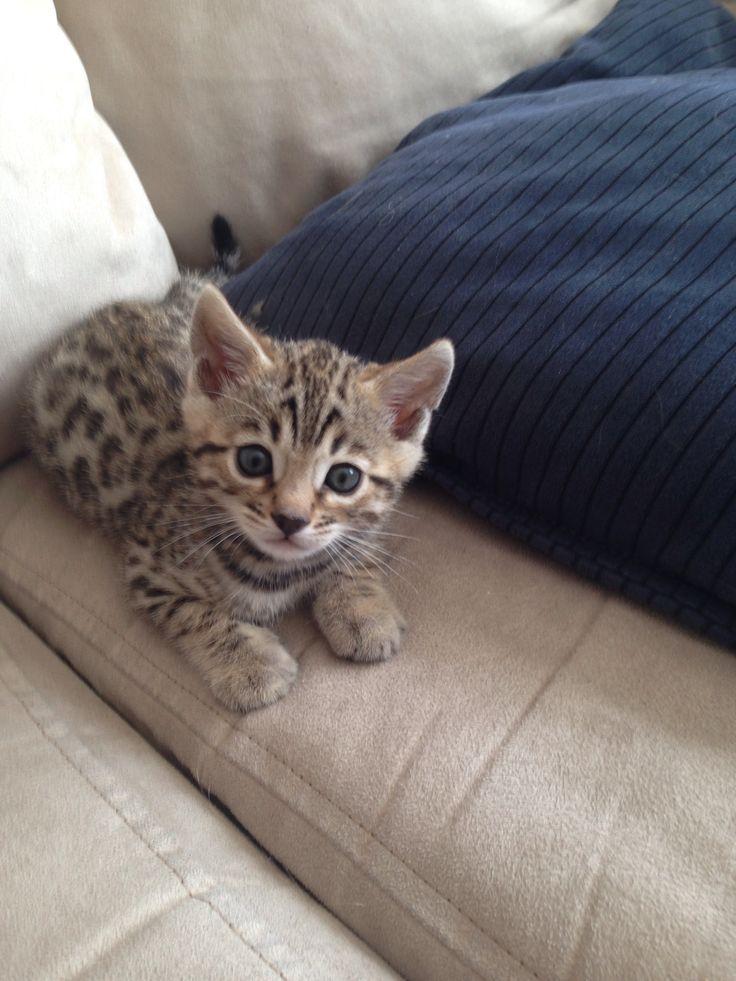 Just 7 weeks old <3