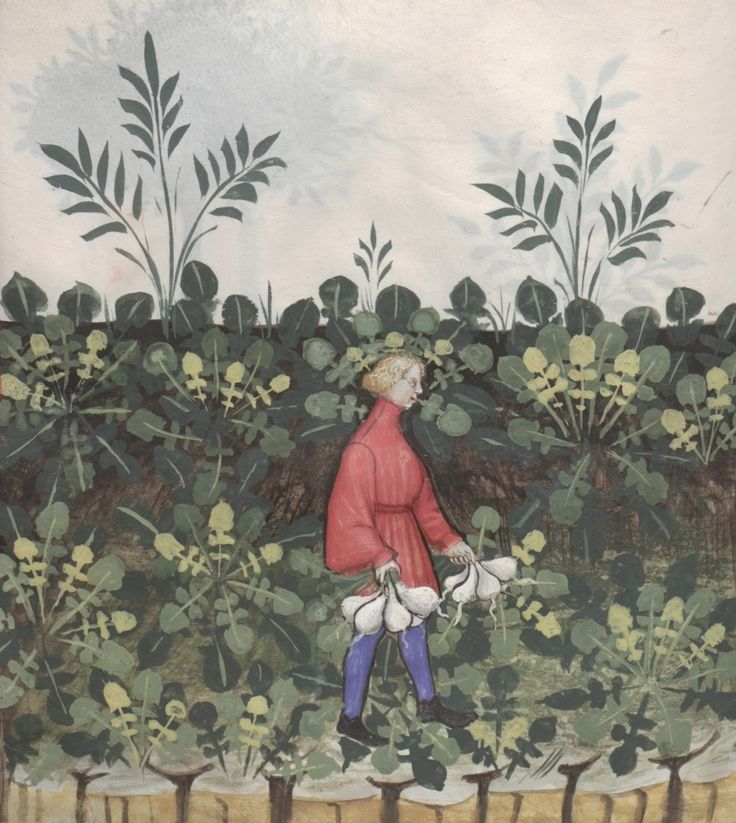 In a field a boy with turnips in both hands - Rape | Österreichische Nationalbibliothek - Austrian National Library | Public Domain