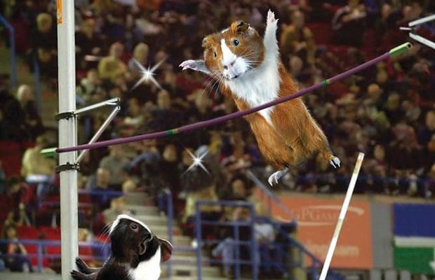 It's not just humans that compete in major sporting events.