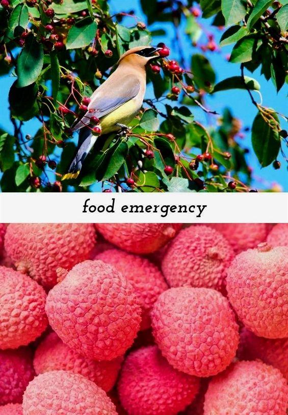 Food Emergency 233 20180909082224 59 2017 Disney Food And Wine Festival Cookbook California Food Safety Manager C California Food Dehydrator Recipes Food
