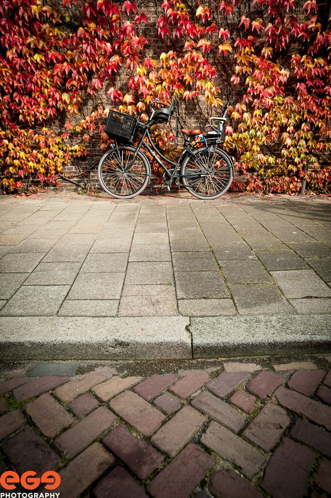 Herbst in Holland (I LIKE IT!)