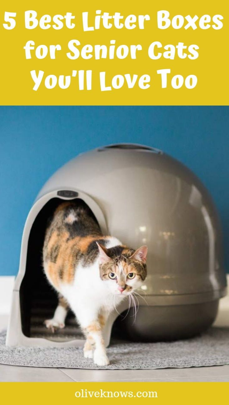 5 Best Litter Boxes For Senior Cats 2020 Guide Oliveknows Best Litter Box Senior Cat Senior Cat Care