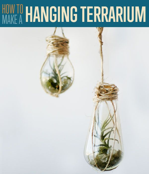 How to Make Hanging Terrariums With Light Bulbs - Hand your favorite air plants to create beautiful, inexpensive home decor #DIYReady | diyready.com