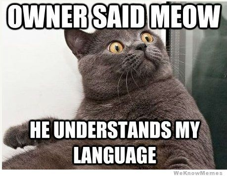 funny memes of cats -