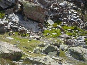Goats at the route.