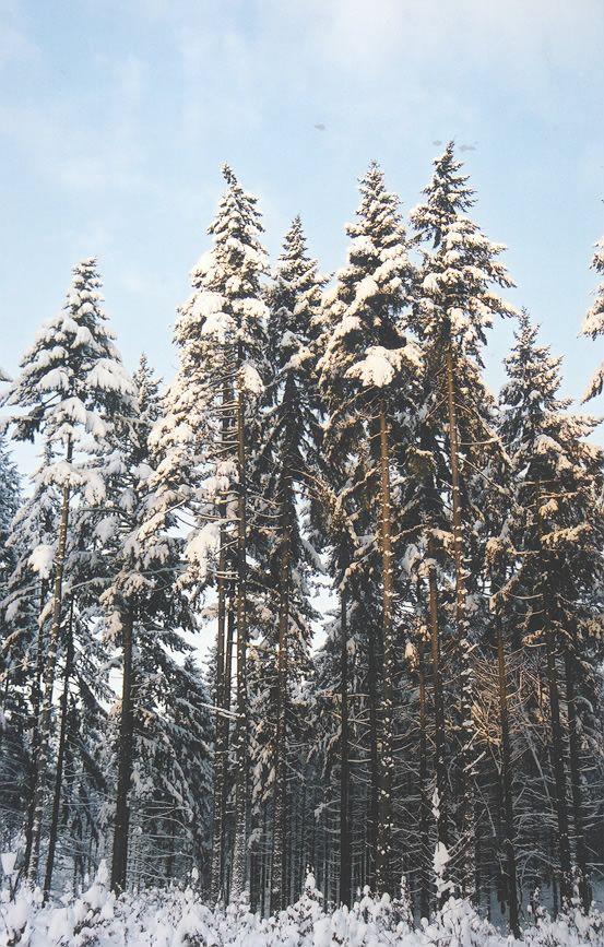 Der er stadig mere nåleskov end løbskov i Danmark selvom andelen af nåletræ er faldet siden sidste skovtælling.