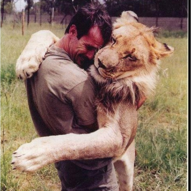 Finding love in unusual places!This Man, Big Cat, Lion, Bears Hug, Alpha Male, True Love, 10 Years, Into The Wild, Animal