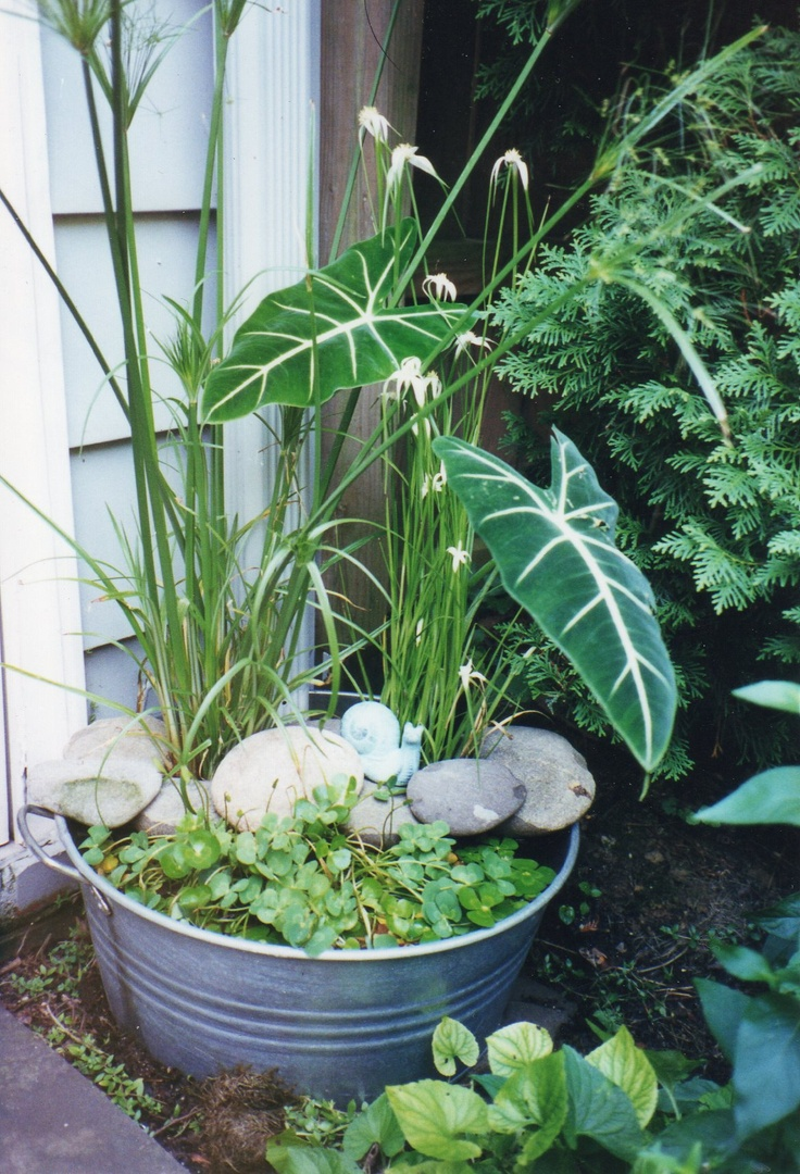 Galvanized tub water garden Repinned by www.claudiadeyongdesigns.com  READ THE BLOG on Container Water Gardens at www.thegardenspot.co.uk/my-blog/2013/06/planting-tips-and-ideas-for-a-container-water-garden.html