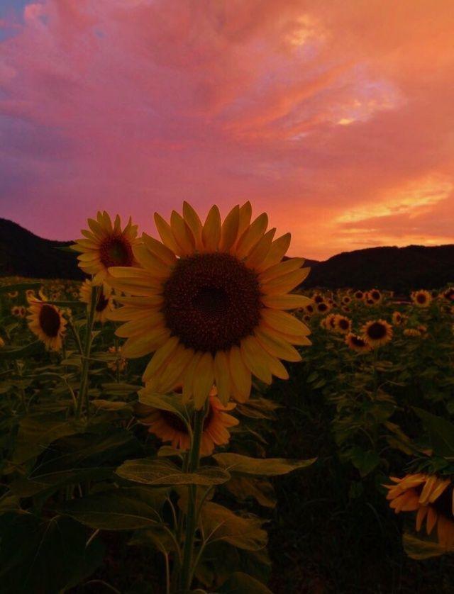 Vsco Emilygray87 Relatablemoods In 2019 Sunflower