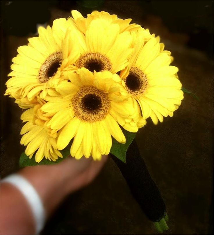 17 Best images about For LJ - Sunny Gerbera Daisies on ...