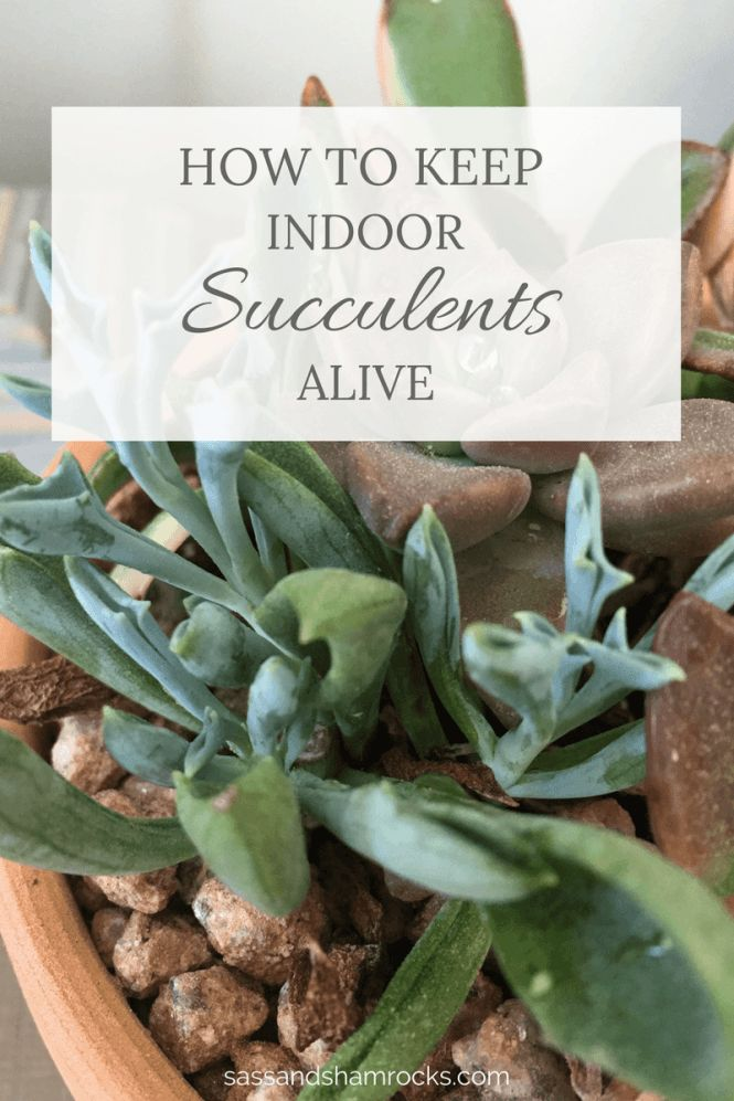 25 best ideas about indoor succulents on pinterest for How to make an indoor succulent garden