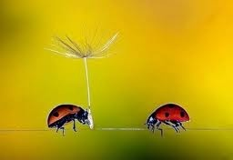 .high wire act: Bugs Collection, Ladybugs Lots, Bugs Flying, Lady Bugs