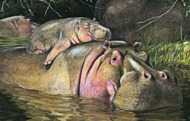 Картинки по запросу ватагин образ животного