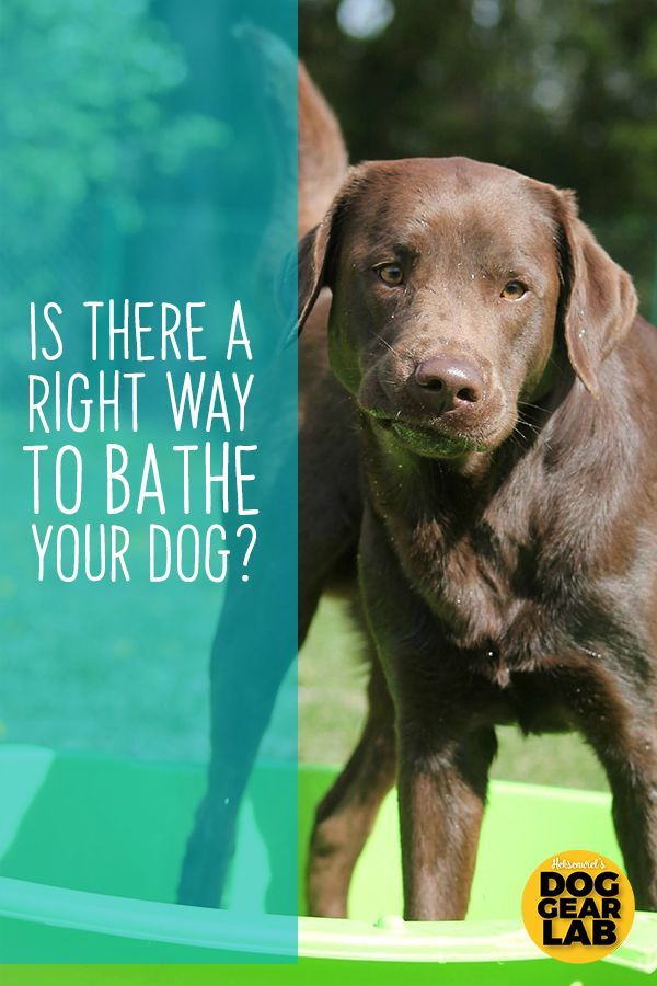 Is There A Right Way To Bathe Your Dog Dogs Dog Training Dog