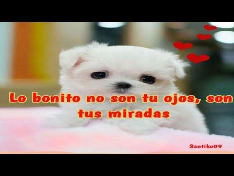 vídeos romanticos: Imagenes De Amor Con Frases De Amor ♡ Video Para D...