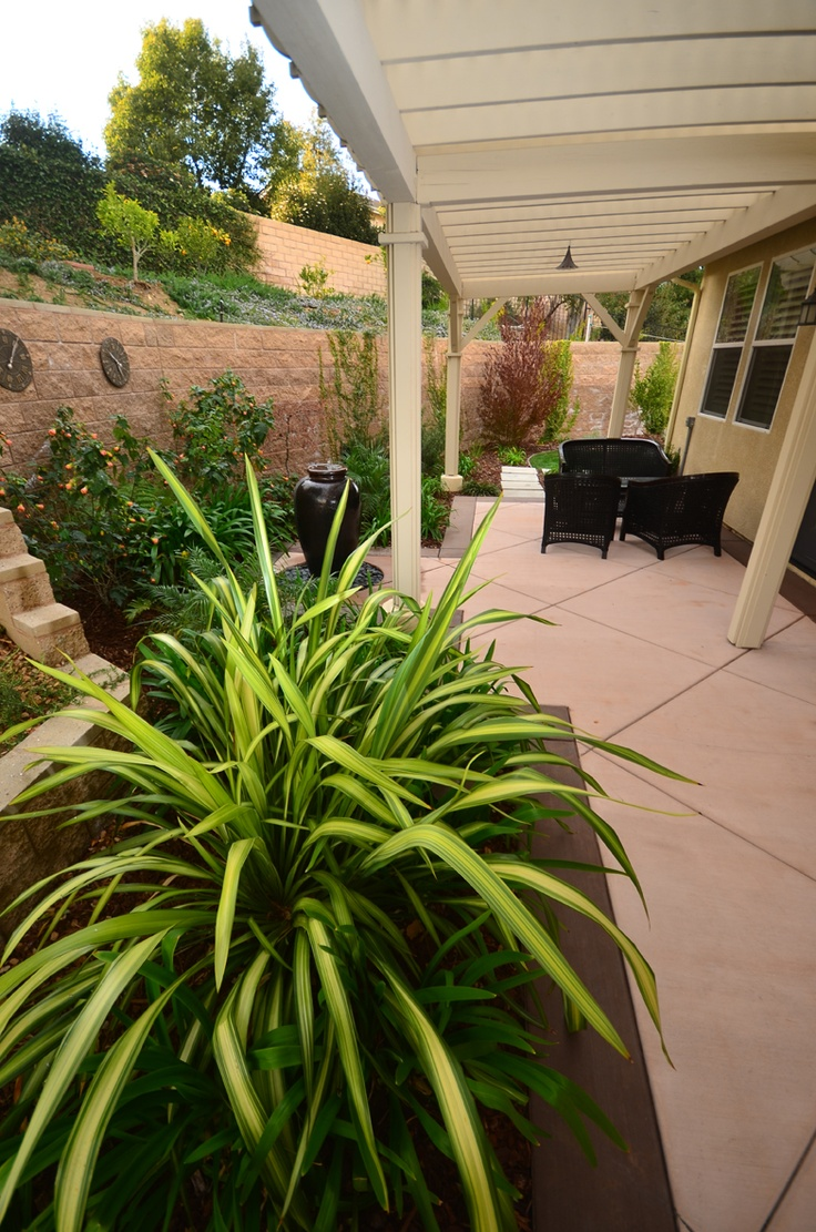 Striped Plants, Tropical, Patio, Stained Concrete, Covered Patio, California, Landscape Design. Dramatic foliage really makes a pop. By Scarlett's Landscape, Inc. http://scarlettslandscaping.com/