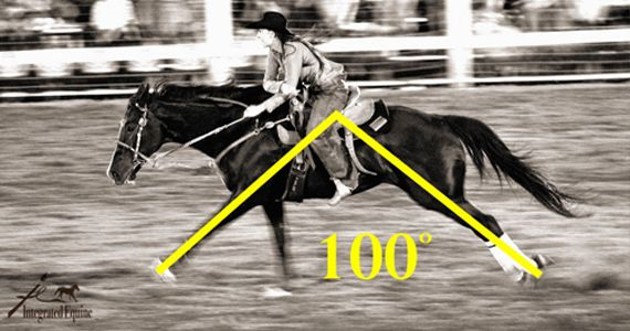 How to Improve Your Barrel Horse's Topline, Stride AND Times! | BarrelRacingTips.com