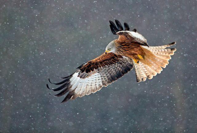 【鷲 鷹 eagle】 無題