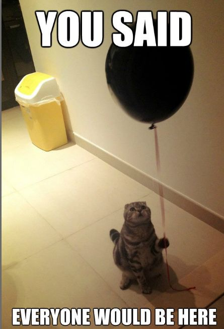 Awwww Poor Birthday Cat Just Try Not To Laugh
