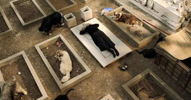 Via Castellana Bandiera – Samira (Elena Cotta) in a symbolic visual, mourning on her daughter's grave, flanked by stray dogs resting in unused graves
