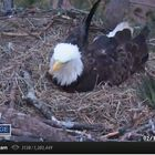 Pull up a separate tab and leave the live eagle cam up today, Feb. 19 -- you might catch a glimpse of something really amazing...
