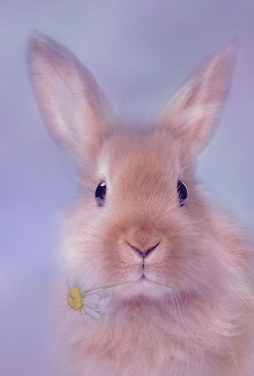 Bunny via L.I.F.E.~sweet and simple~