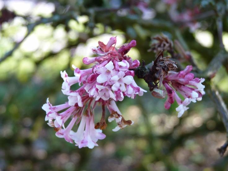 #flower #bluete #blossom