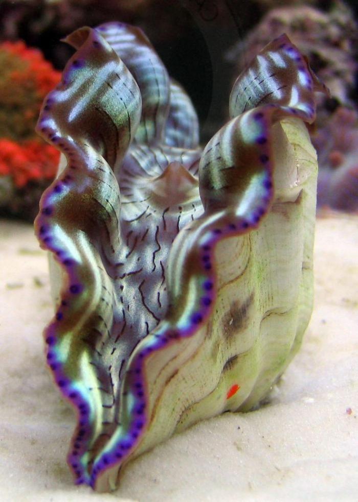 Meeresgrund Arten von Meereslebewesen