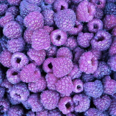 Image result for lavender tumblr aesthetics