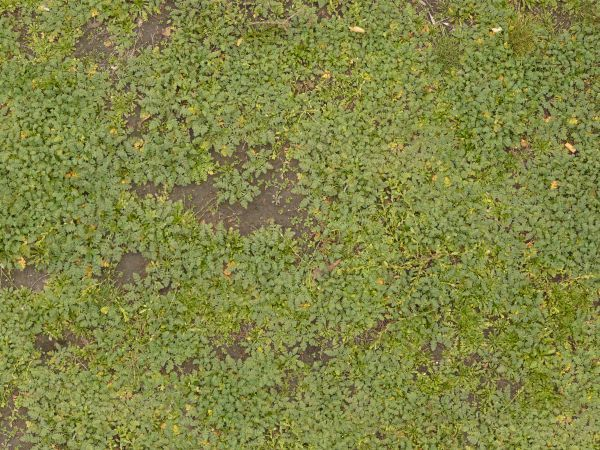 dirt patches - Google Search
