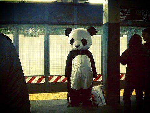 Panda waiting for a train