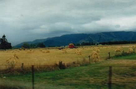 Hay Harvesting - South Island