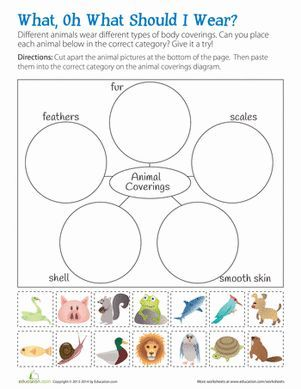 What are the different types of animal body coverings? Help kids sort and categorize these animals based on their body coverings.