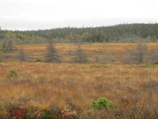 The Heath lands
