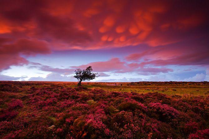 pink, pink, pink, pink: Adam Burton, Tree, Sunsets, Beautiful, Cloud, Pink, Places, Photo