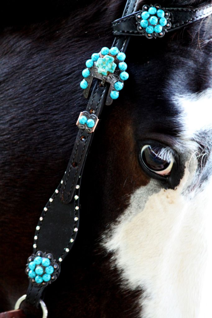 Cowboy Junkie tack would be gorg on a buckskin or palomino