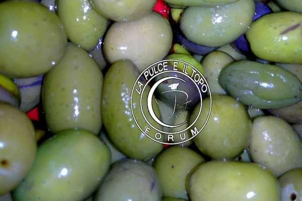 La Pulce e il Topo :: Discussione: Addolcire le olive Verdi (1/1)