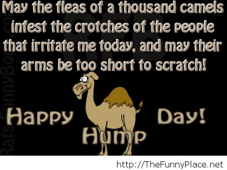 17 Best images about HUMP DAY on Pinterest | Quotes quotes ...