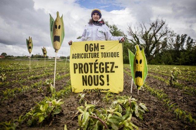 © Pierre Baelen / Greenpeace  OGM : bientôt un nouveau cadre européen ? http://agriculture.greenpeace.fr/ogm-bientot-un-nouveau-cadre-europeen
