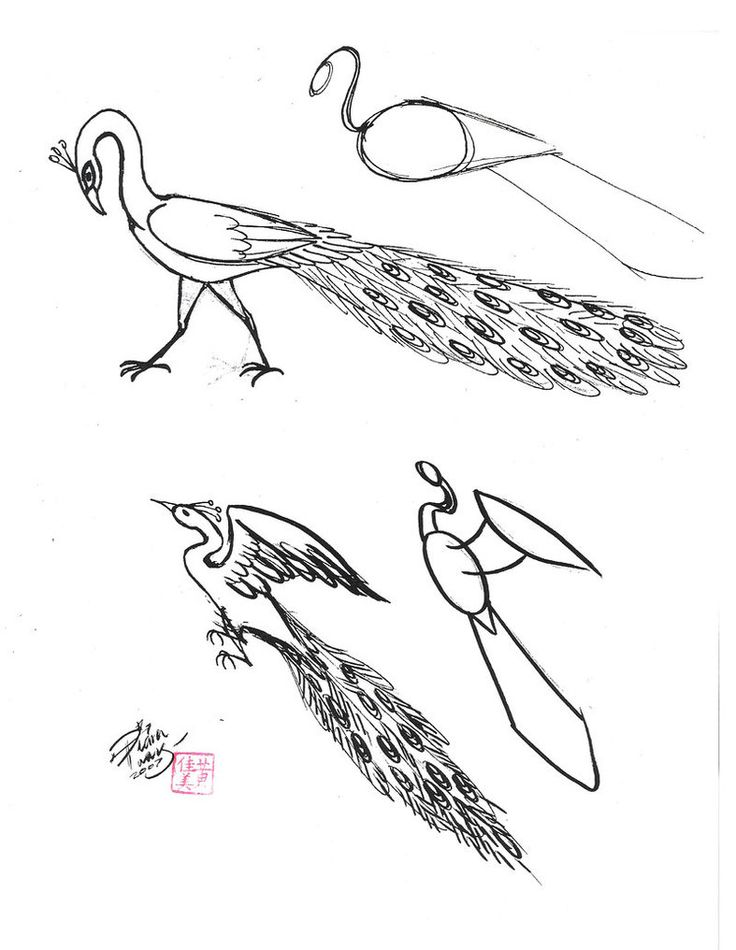 how to draw a peacock draw a peacock 3 by diana huang