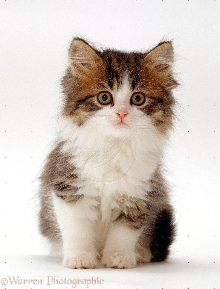 Lol Doll Baby Cat