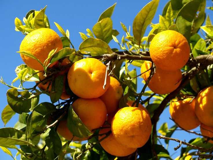 Awesome Orange Tree Wallpaper Images For Desktop Background