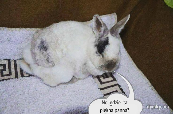 Buddy was adopted to a beautiful rabbit wife in Germany. Thank you for sharing our posts! #Hase #Kaninchen #кроль #whiterabbit #兔子 #králík #kanin #jänis #lapin #κουνέλι #kelinci #conejo #ウサギ #兎 #うさぎ #doadopcji #nofilter #króliczek #krolik #l4l #like4like #likeforlike #rabbit #rabbits #bunny #bunnies #rescue  Did you know? 4 rabbits were adopted in 2017  Keep your fingers crossed for more adoptions or visit our facebook page to learn more