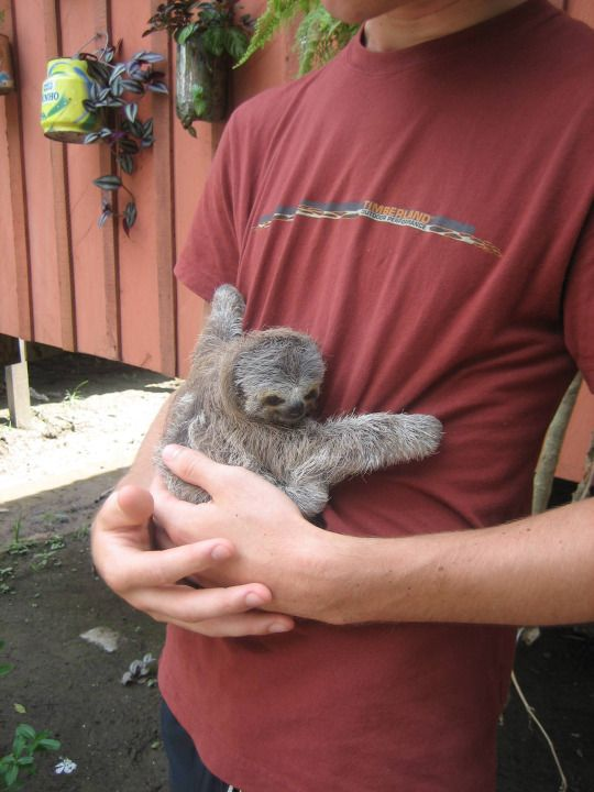 When life gets you down you can always rely on sloths to keep you going... Don't you wish you could be hugged by this little guy?