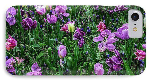 Jenny Rainbow Fine Art Photography IPhone 7 Case featuring the photograph Carpet Of Purple Tulips In Keukenhof by Jenny Rainbow