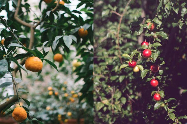 Projecto pensado por Sofia Lage quer dar um destino responsável à fruta que cresce nas árvores localizadas em sítios públicos e pôr fim ao desperdício. O Fruta de Rua está em votação para o Orçamento Participativo Portugal até Setembro